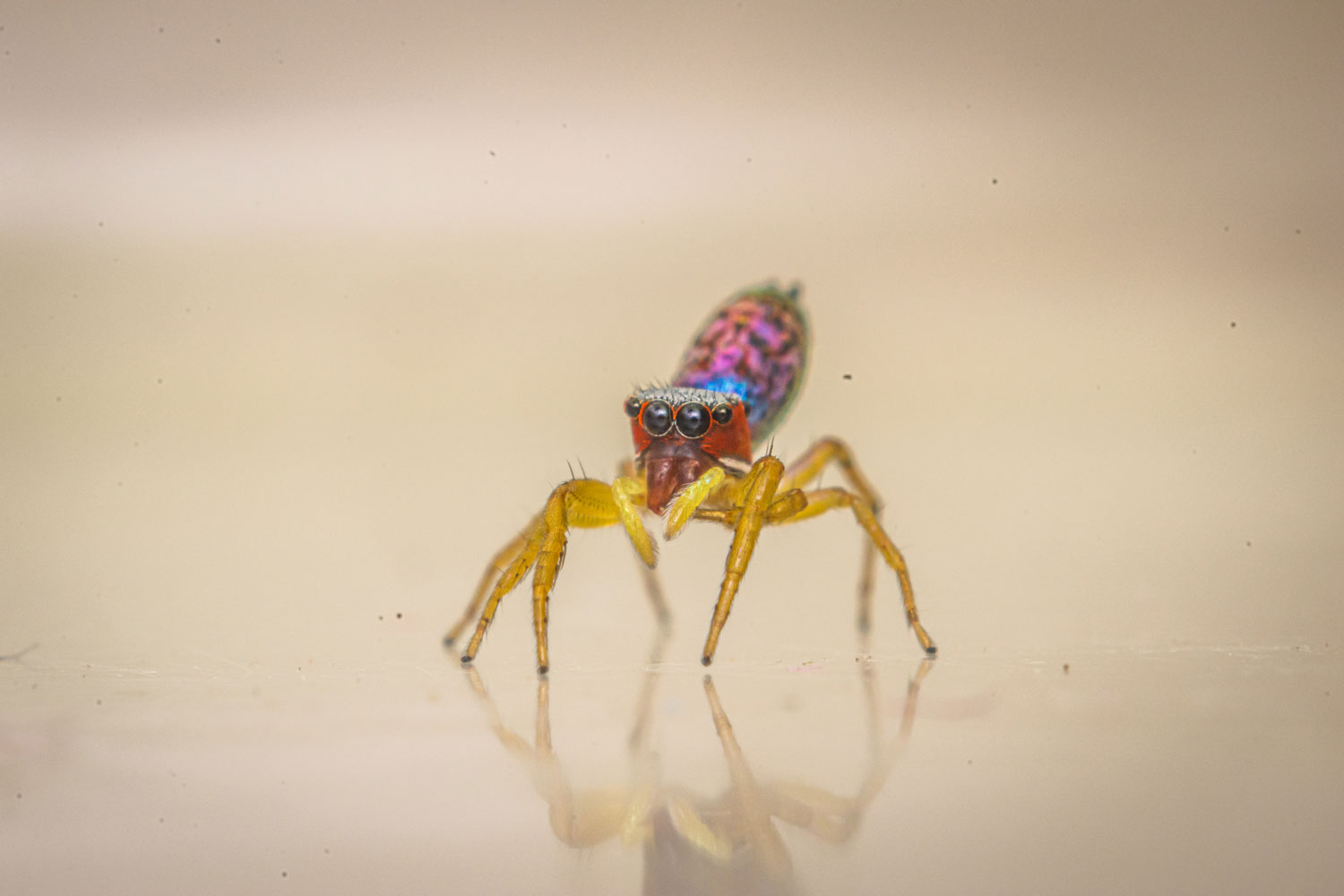 Cute Beautiful Colorful Spider